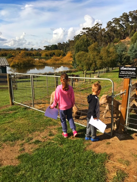 Top 5 low cost camp spots Tasmania - Old Mac's Farm