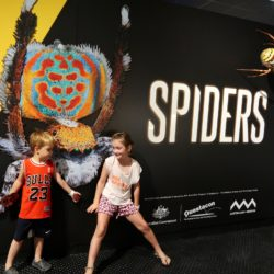 spiders at magnt